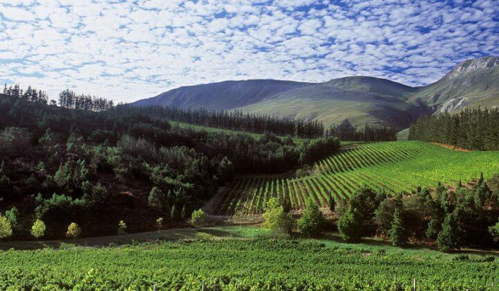helicopter-tours-wine-tasting-franschhoek