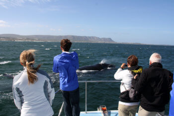 whale-watching-hermanus-south-africa