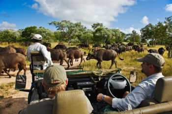 royal-malewane-south-africa-safari-drive-buffalo