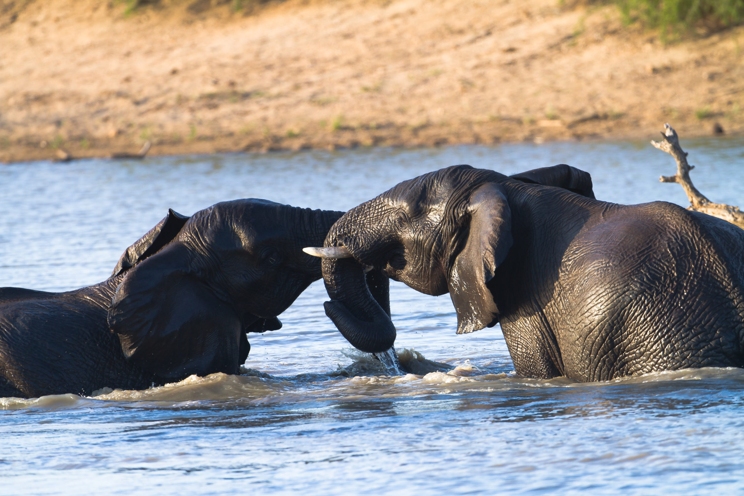 rm-wildlife-elephant-water-south-africa