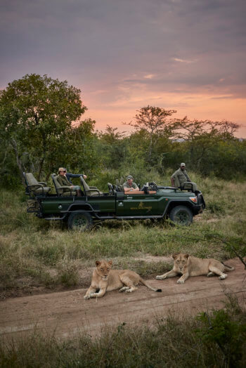 lion-kruger-luxury-safari-lodge